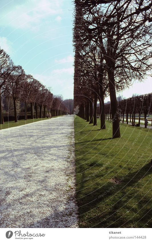 Nature Tree Garden Lanes & trails Park Line Lawn Bushes Division Cut Placed Triangle Groomed Vanishing point Unnatural Divided