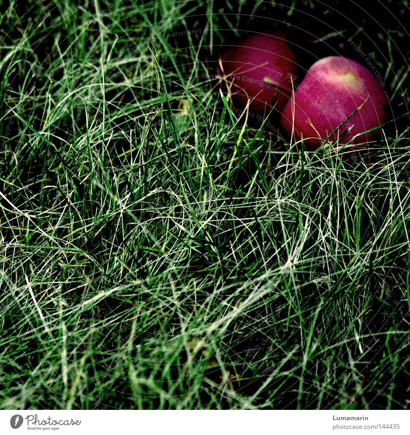affair Attempt Mature Grass Meadow Autumn Mysterious Side by side Together Transience Fruit Windfall Apple Lie Shadow Hiding place Hide Individual In pairs