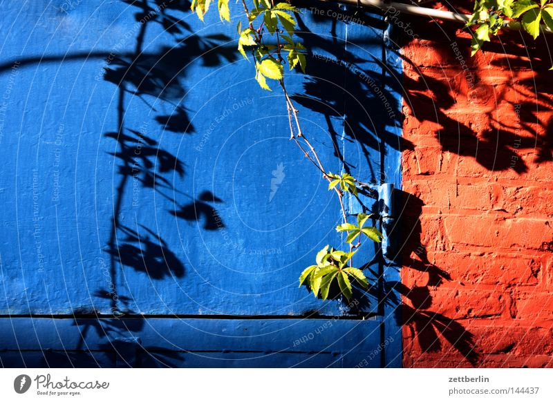 Backyard in Kreuzberg Door Gate Closed Iron Blue Wall (barrier) Plant Foliage plant Tendril Creeper Shadow Light Sun Sunday Detail Summer