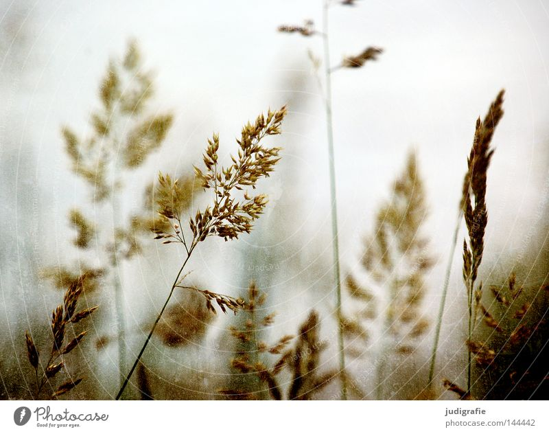 Beautiful Plant Summer Colour Meadow Grass Glittering Soft Peace Delicate Pasture Stalk Blade of grass Smooth Flexible Pollen