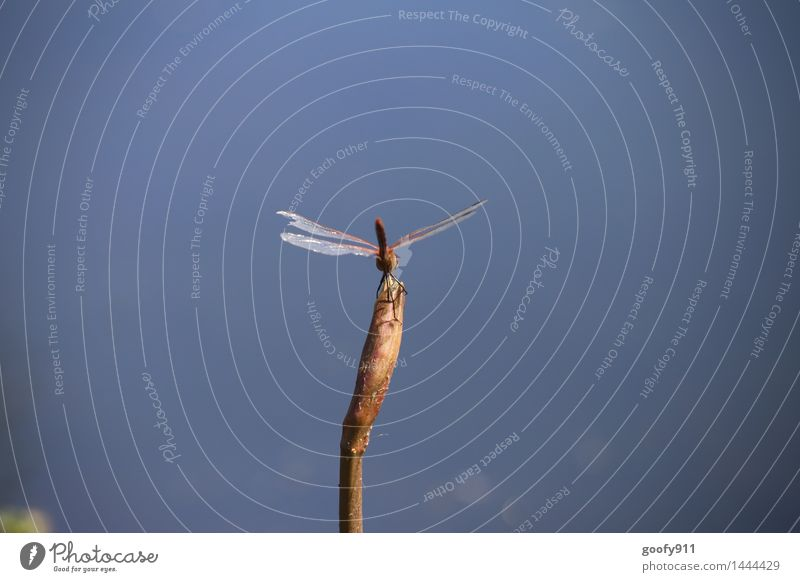 Landed Environment Nature Landscape Water Plant Grass Foliage plant Garden Park Pond Lake Animal Wild animal Wing Dragonfly Dragonfly wings 1 Observe Stand