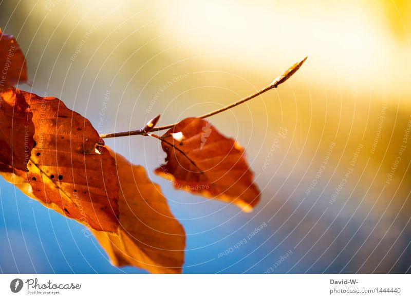 Sky Nature Plant Blue Beautiful Sun Landscape Leaf Winter Forest Environment Life Blossom Autumn Orange Park