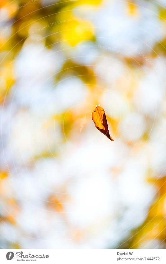 Sky Nature Plant Beautiful Sun Landscape Leaf Winter Forest Environment Yellow Autumn Art Weather Wind Beautiful weather