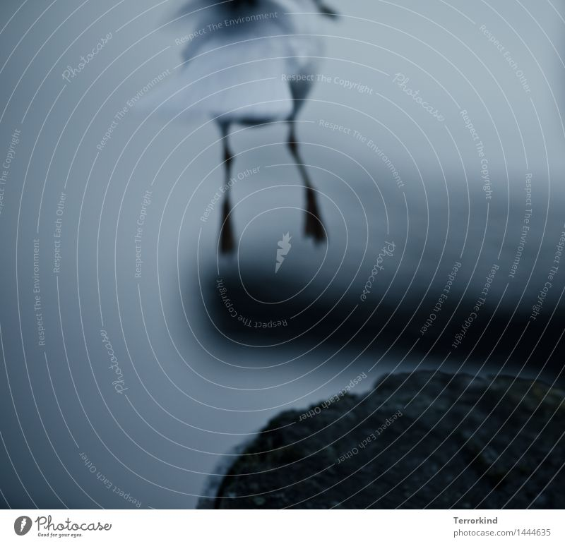 a.little.off Seagull Flying Floating Flight of the birds Beginning Departure Go off Free Bird Claw Animal foot Going
