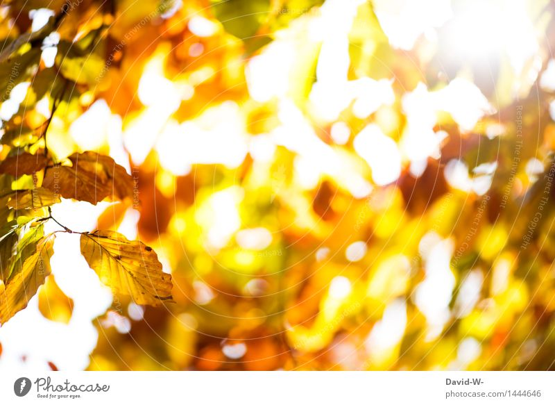 GoldYellow Art Work of art Environment Nature Landscape Plant Air Sun Sunrise Sunset Sunlight Autumn Winter Climate Weather Beautiful weather Tree Leaf Forest