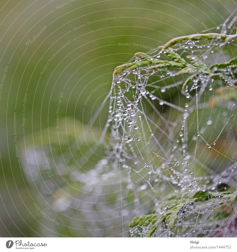 Another network. Helgiland II. Environment Nature Drops of water Autumn Fog Plant Bushes Bog Marsh Spider's web Hang Authentic Exceptional Small Wet Natural