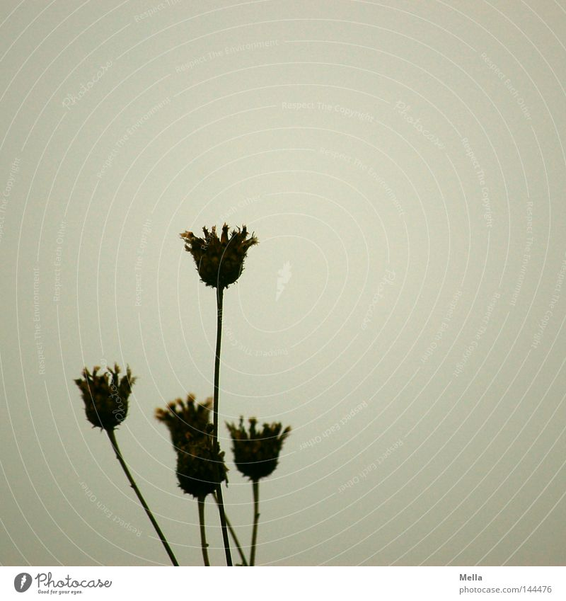 Nature Flower Plant Calm Autumn Blossom Gray Environment Gloomy Transience Natural Dry Shriveled Dreary Faded To dry up