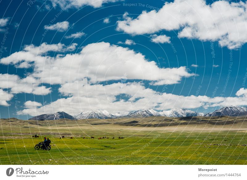 Motorcycle infront and cows graze in the field in front of the hills Cow Field Hill hillside Hilly landscape nomad altay Landscape Nature Green Grass Summer