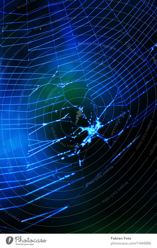 net Nature Summer Spider's web Net Blue Bluish Colour photo Exterior shot Detail Abstract Pattern Structures and shapes Evening Twilight Night Silhouette