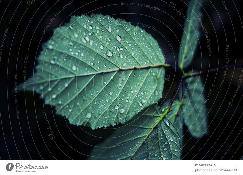 green Environment Nature Plant Water Drops of water Leaf Foliage plant Wild plant Dark Thin Authentic Simple Fluid Uniqueness Cold Small Near Wet Natural Point