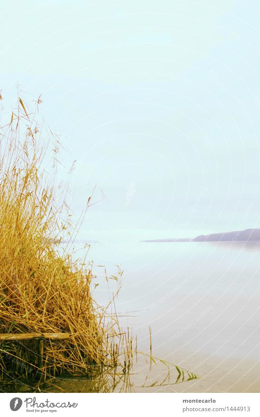 Sky Nature Plant Blue Water Relaxation Clouds Far-off places Cold Environment Autumn Grass Natural Lake Brown Horizon