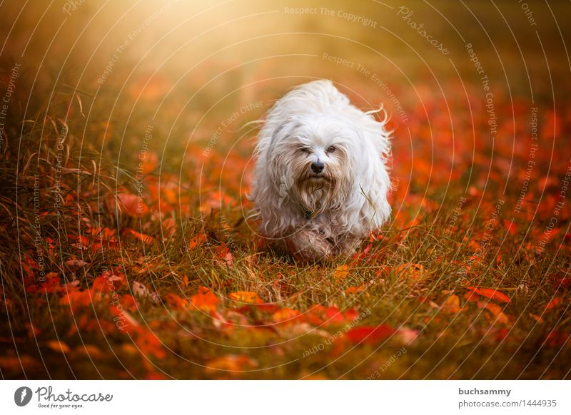 Dog Nature Green White Leaf Animal Autumn Grass Small Copy Space Seasons Long-haired Pet Mammal