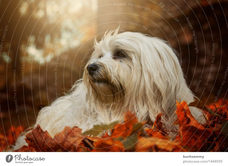 Nature Dog Green White Leaf Animal Autumn Grass Small Orange Copy Space Lie Seasons Long-haired Pet Mammal