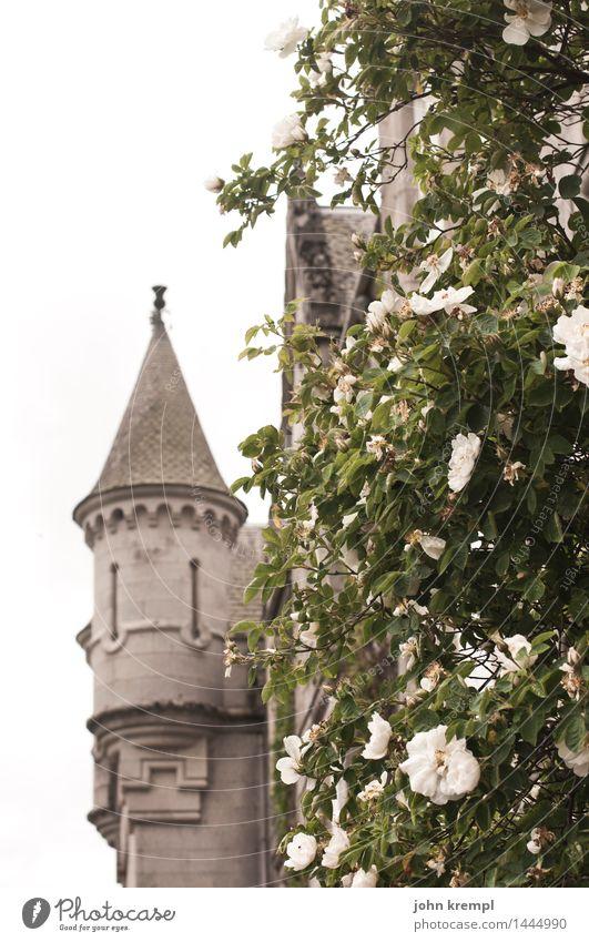 Plant Tourism Perspective Blossoming Joie de vivre (Vitality) Adventure Transience Romance Historic Tower Might Rose Kitsch Tourist Attraction Castle Luxury