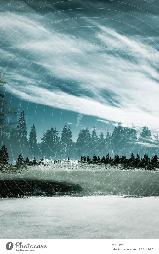Sky Vacation & Travel Blue Green Landscape Clouds Winter Forest Cold Environment Snow Lake Snowfall Weather Ice Fresh