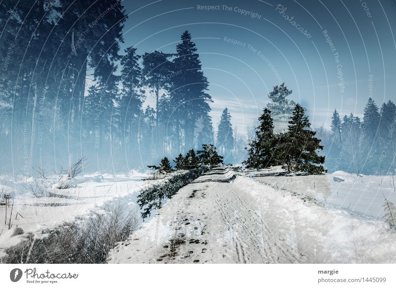 Winter- dream- road Vacation & Travel Tourism Trip Snow Winter vacation Environment Nature Landscape Plant Animal Sky Sunlight Climate Ice Frost Snowfall Tree