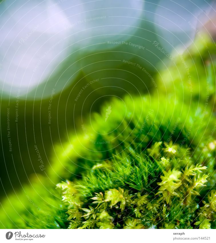 Moss-World Nature Plant Green Leaf Dark Environment Lighting Background picture Small Lamp Growth Earth Soft Floor covering Universe Delicate
