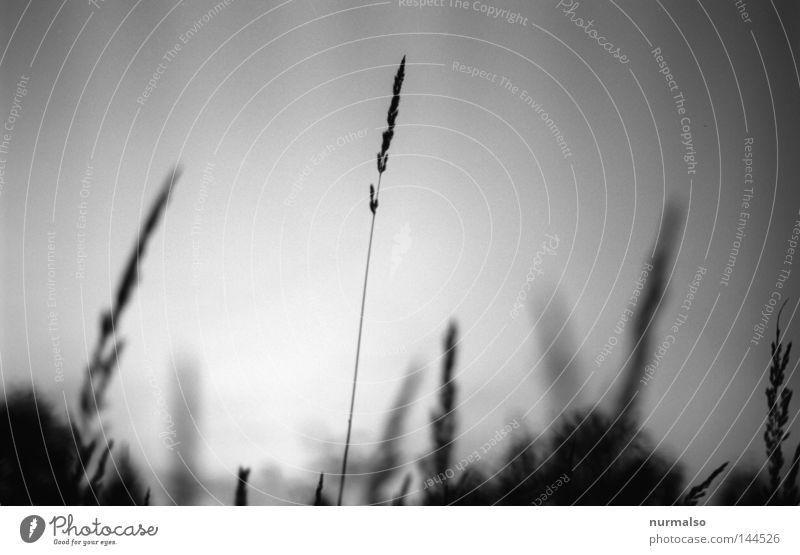 Sky Nature White Black Emotions Grass Lanes & trails Gray Blossom Dream Moody Field Lie Closed Bed Farm