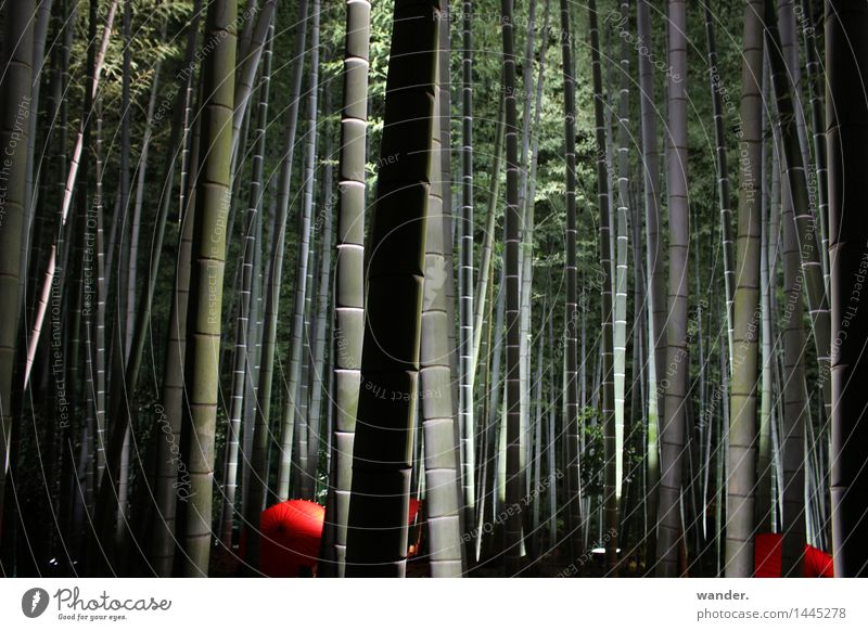 Bamboo grove with umbrellas and lighting, Japan Harmonious Relaxation Calm Meditation Decoration Art Culture Event Nature Plant Summer Autumn Tree Exotic Garden