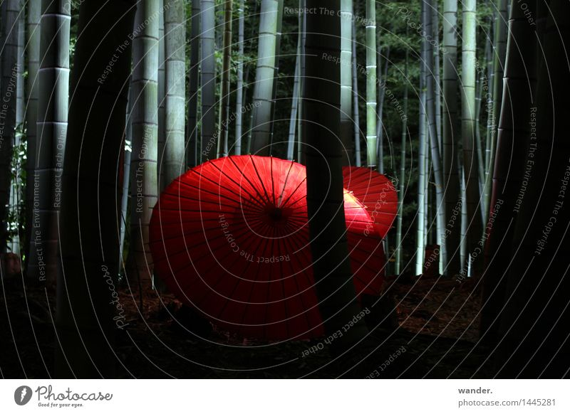Bamboo forest with paper umbrella, Japan Vacation & Travel Tourism Trip Far-off places Art Culture Event Nature Plant Summer Autumn Tree Exotic Garden Park