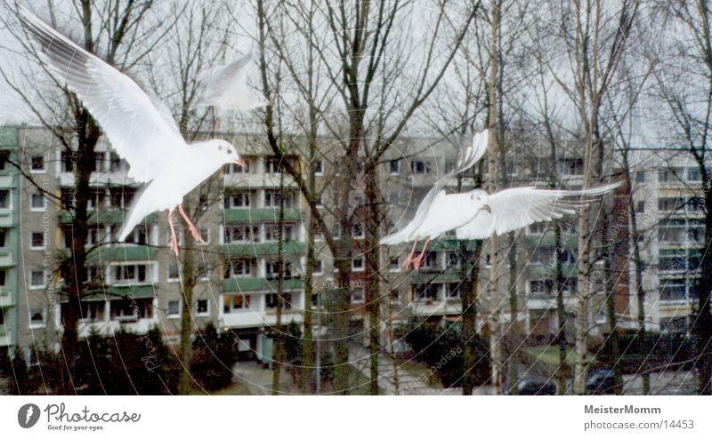 White Window Aviation Seagull