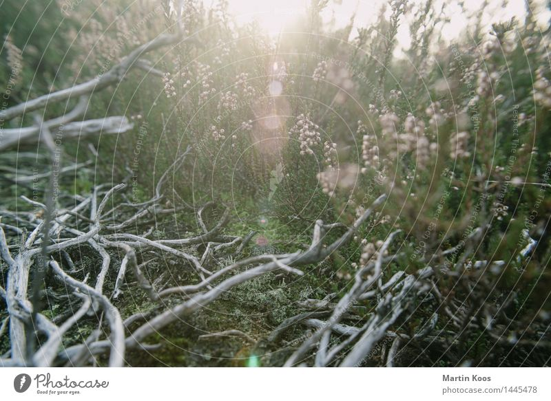 December Nature Landscape Plant Earth Sunlight Autumn Winter Bushes Branchage Meadow Field Forest Esthetic Gray Green Pink Colour photo Exterior shot Close-up