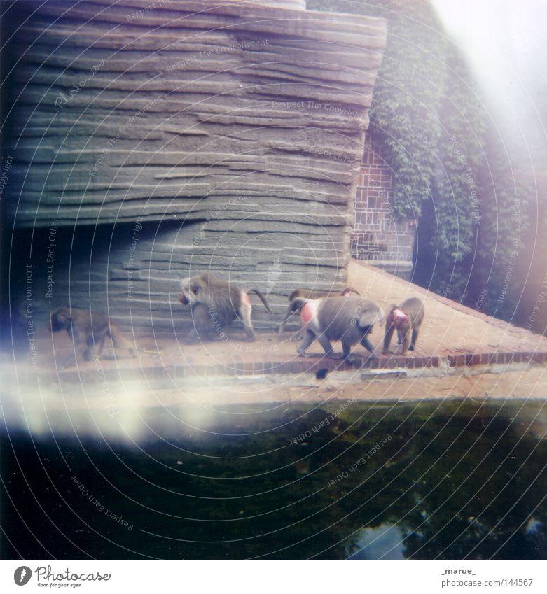 Hand Eyes Eyes Nutrition Animal Playing Food Sleep Gloomy Zoo Discover Boredom Leipzig Captured Mammal Monkeys