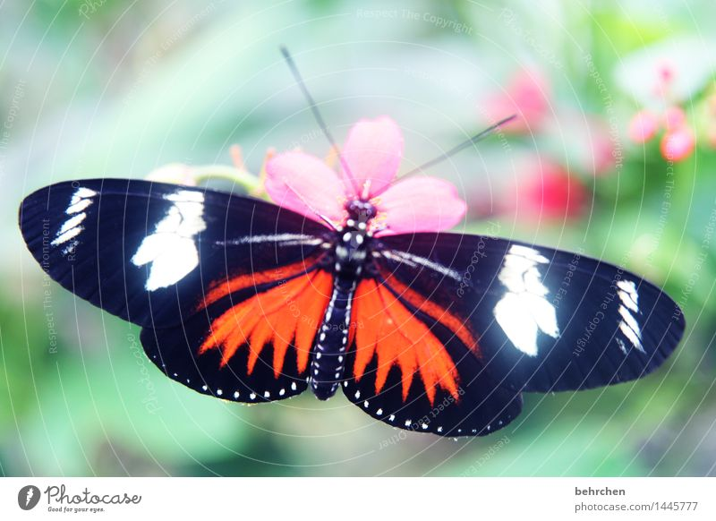 splendid Nature Plant Animal Spring Summer Beautiful weather Flower Leaf Blossom Garden Park Meadow Wild animal Butterfly Wing 1 Observe Relaxation Flying