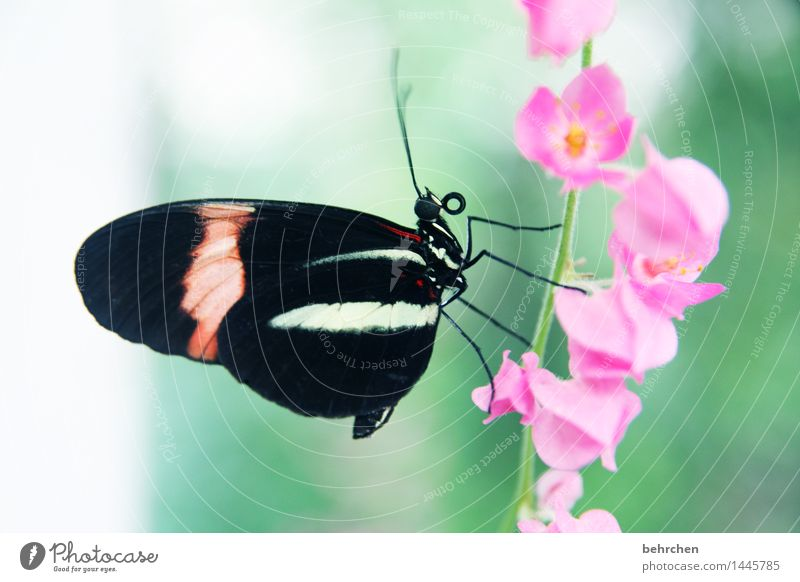 never give up! Nature Plant Animal Spring Summer Beautiful weather Flower Blossom Garden Park Meadow Wild animal Butterfly Animal face Wing 1 Observe Blossoming