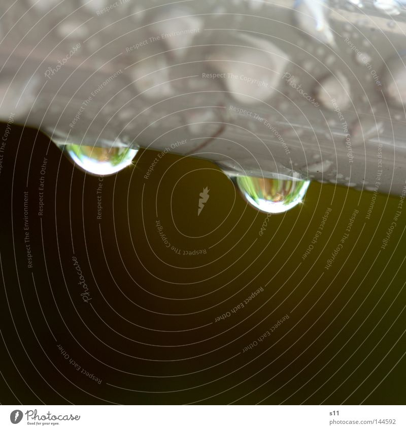 Water Green Gray Rain Brown Weather Drops of water Wet Clarity Thunder and lightning Trickle Dripping