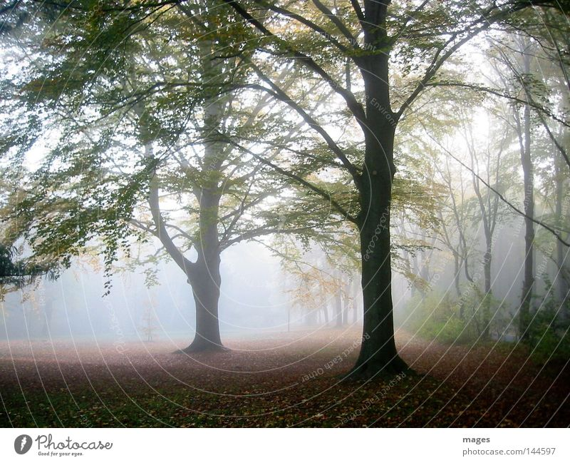 morning fog Tree Autumn Fog Morning Light Sun Shadow Damp Leaf Diffuse Morning fog Automn wood Forest
