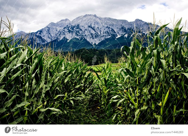 transparency Nature Landscape Clouds Summer Climate Climate change Bad weather Agricultural crop Corn cultivation Alps Mountain Peak Threat Dark Sustainability