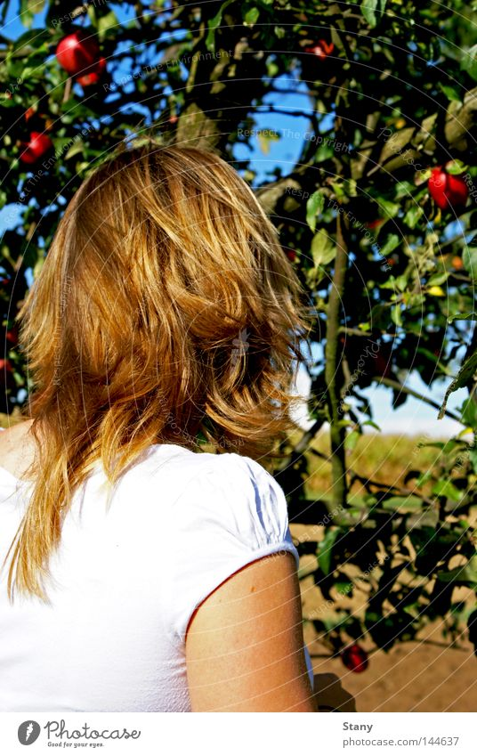 Eva and the apple tree Blonde White Apple Red Green Field Tree Apple tree Search Beautiful weather In transit Grief Hope Tree of knowledge Colour Sadness eva