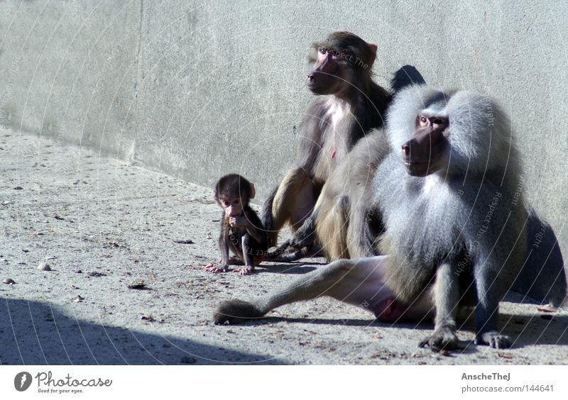 Animal Baby animal Wild animal Group of animals Trust Africa Zoo Harmonious Mammal Monkeys Animal family Vertauen Young monkey
