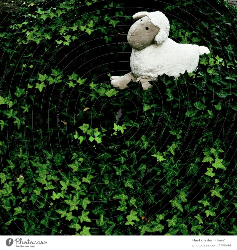 Sheep-less Hill Groomed Plagues Green Tails Pelt Cuddly toy Ivy White Playing Fraud Mammal Lanes & trails Pasture Nature Freedom unsatisfactory Walking