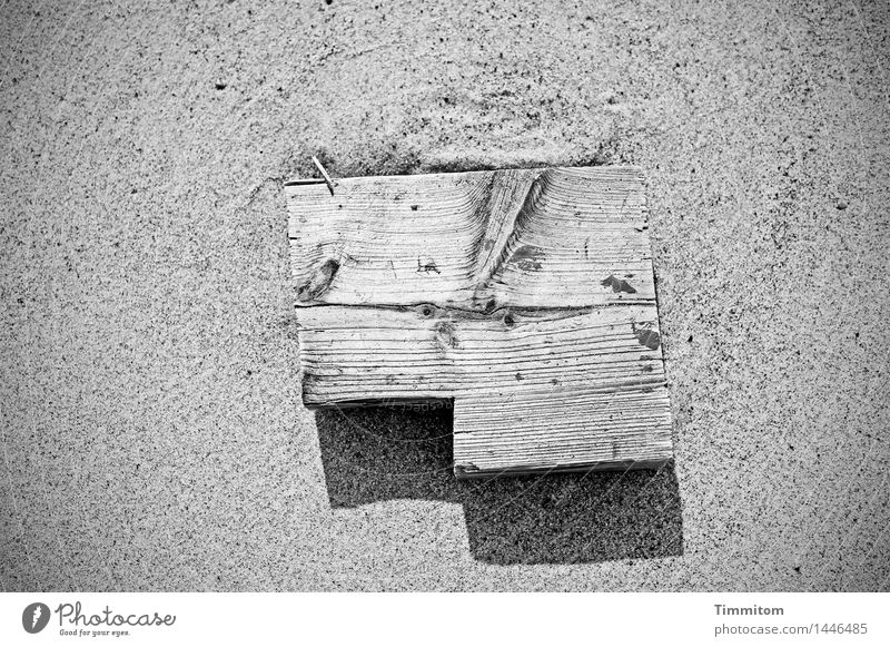 Who can read the signs? Elements Sand Beach Denmark Wood Lie Simple Green Black Black & white photo Structures and shapes Wood grain Shadow Exterior shot Day