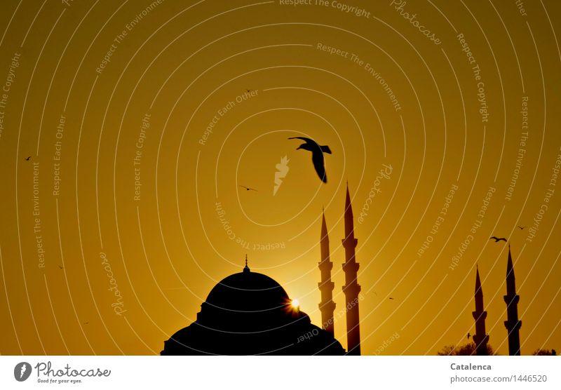 Seagull over minaret muezzin Cloudless sky Sunrise Sunset Beautiful weather Mosque mosque dome minarets Tourist Attraction Landmark Monument Blue Mosque Bird