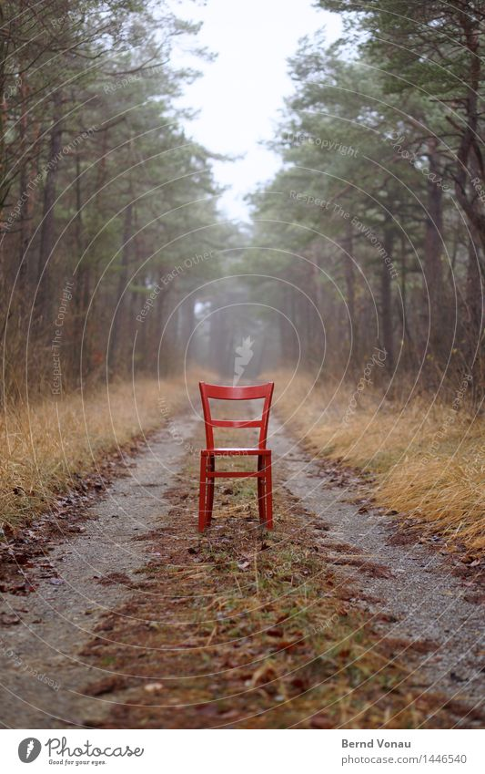 In the way Environment Nature Landscape Plant Tree Grass Forest Brown Gray Green Emotions Moody Chair Lanes & trails Future Break Time Pine Driveway Forestry