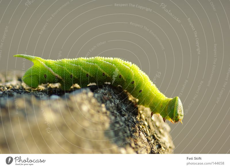 Green Animal Head Legs Going Walking Insect Tails Crawl Reptiles Caterpillar