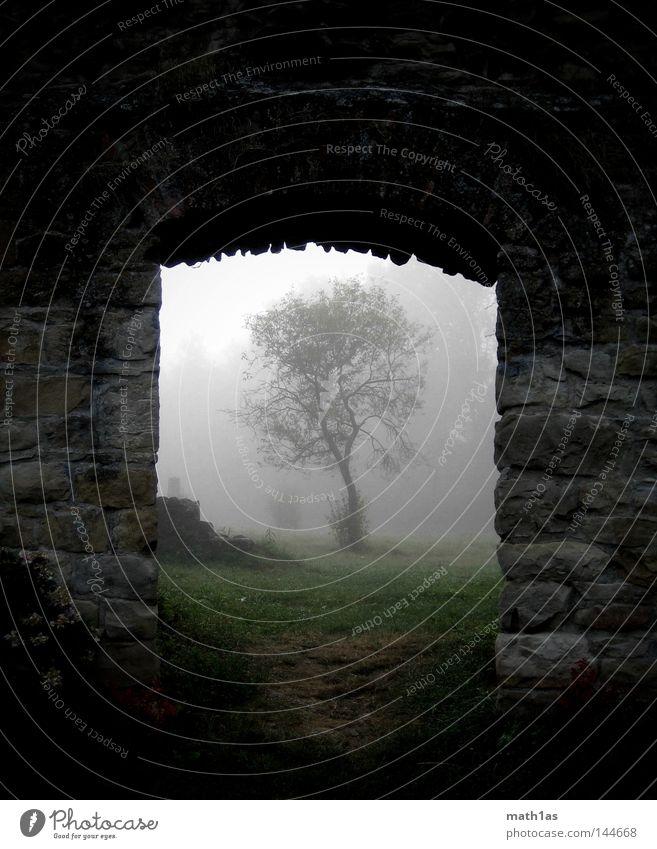 Tree Stone Wall (barrier) Fog Ruin House of worship Stone wall