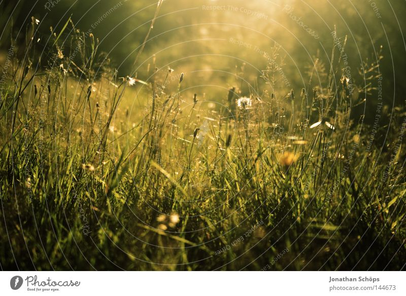 Nature Green Beautiful Flower Relaxation Calm Joy Yellow Life Emotions Meadow Lighting Grass Dream Leisure and hobbies Esthetic
