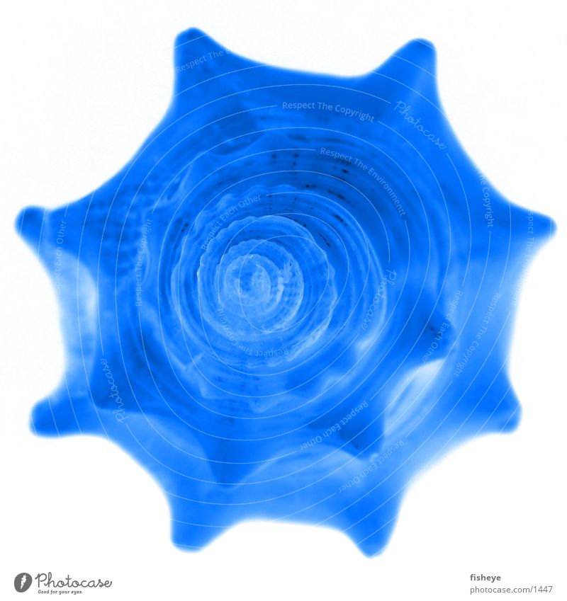 seashell Mussel Spiral Ocean Blue