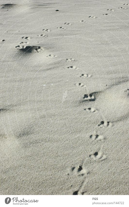 footsteps Beach Seagull Lake Wind Feed Bird Cold Passion Breeze March Vacation & Travel To enjoy Earth Sand Tracks Weather Curve Search tramp Feet Clarity