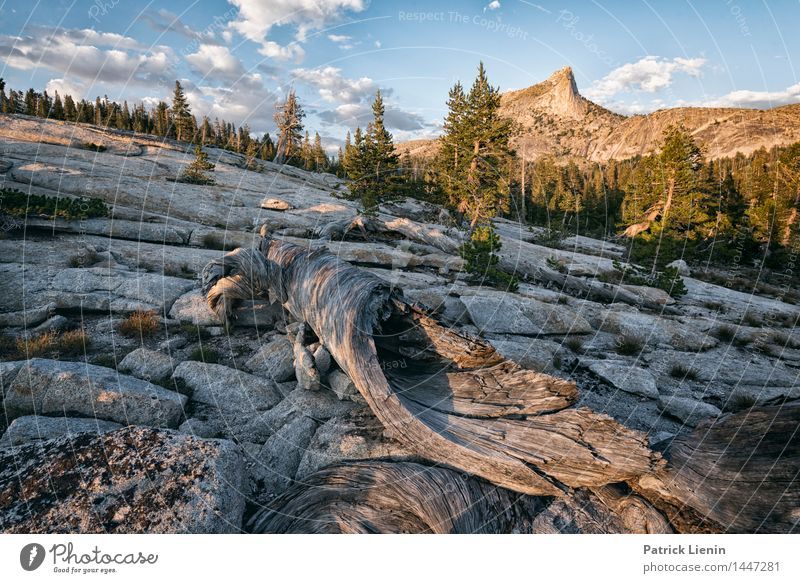 Yosemite NP Wellness Well-being Contentment Senses Relaxation Calm Vacation & Travel Tourism Trip Adventure Far-off places Freedom Expedition Camping Summer