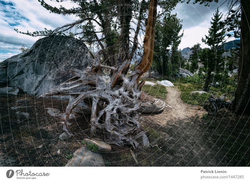 tree root Vacation & Travel Trip Adventure Far-off places Environment Nature Landscape Elements Earth Summer Climate Climate change Weather Plant Tree Forest