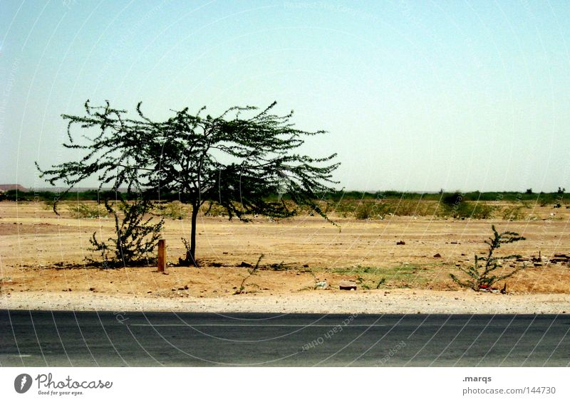 Tree Summer Vacation & Travel Street Warmth Desert Dry India Steppe