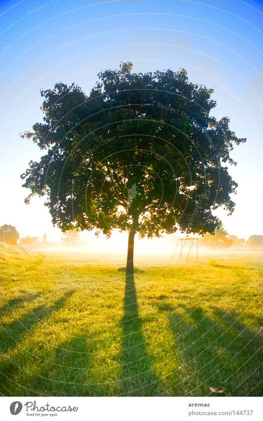 Tree Sun Autumn Meadow Bright Back-light Sunrise Individual Celestial bodies and the universe