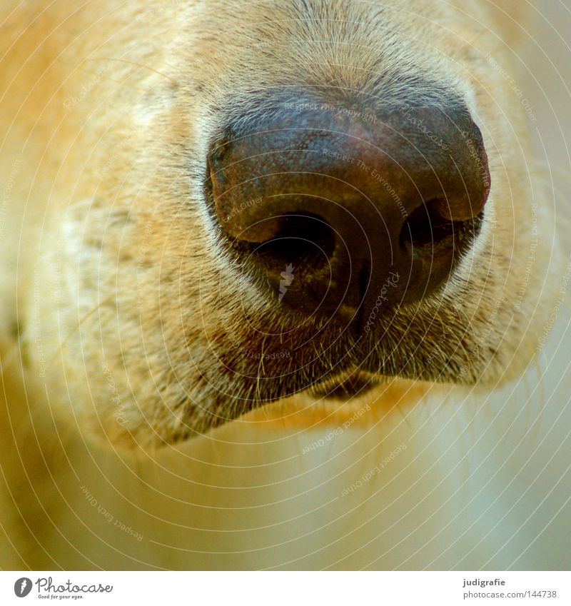 The right nose Dog Nose Snout Odor Facial hair Pelt Beard hair Mammal Detail Near Soft Macro (Extreme close-up) Close-up Colour