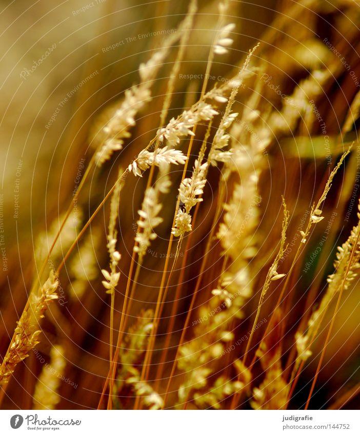 grass Grass Light Green Stamen Pollen Stalk Blade of grass Ear of corn Glittering Beautiful Soft Hissing Meadow Delicate Flexible Sensitive Pennate Pasture