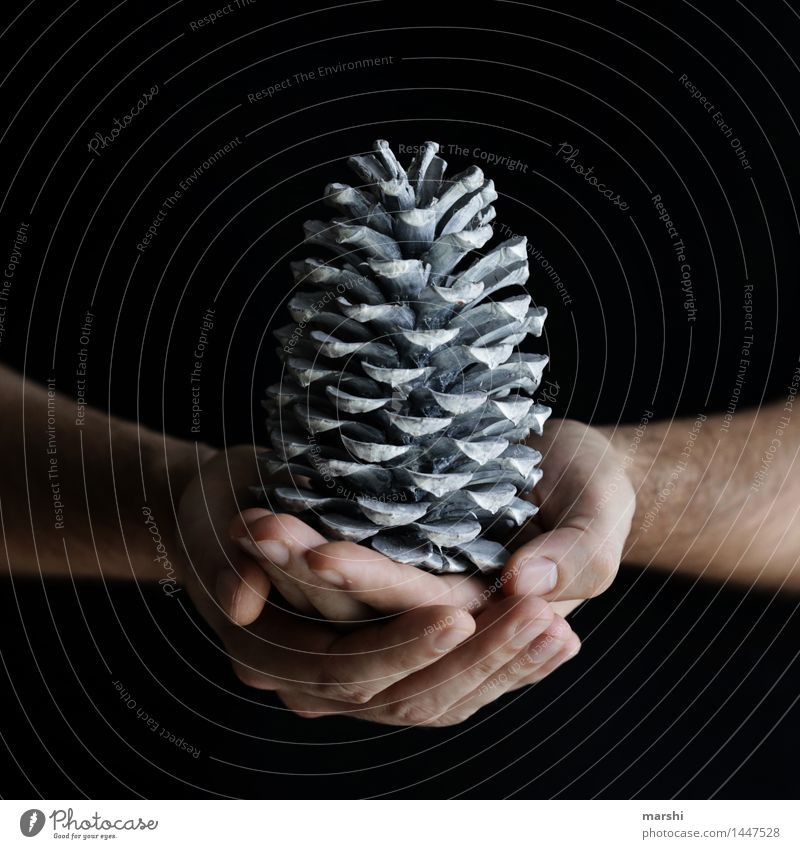Christmas cone Hand Nature Emotions Moody Cone Christmas decoration Christmas & Advent Seasons Colour photo Subdued colour Interior shot